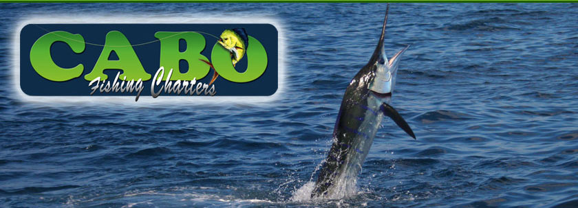 Striped marlin fishing in Cabo San Lucas