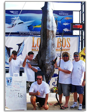 First place marlin in the 2011 Los Cabos Billfish Tournament